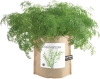 Potting Shed Creations - Garden in a Bag - Dill