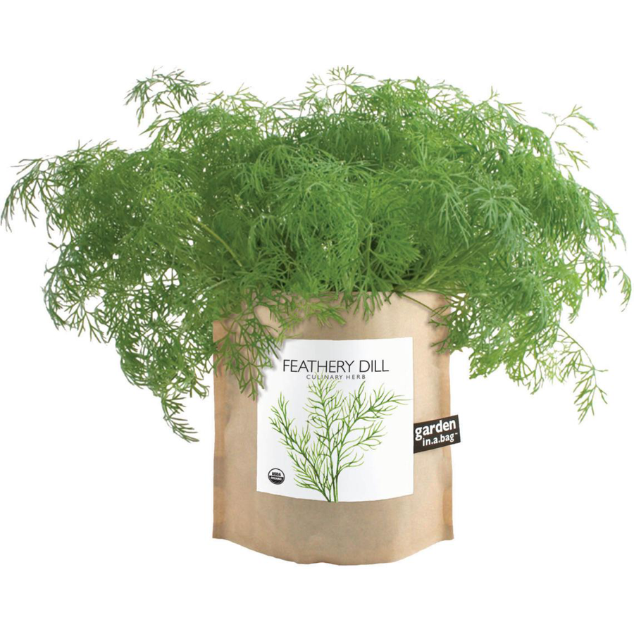 Image For Potting Shed Creations - Garden in a Bag - Dill