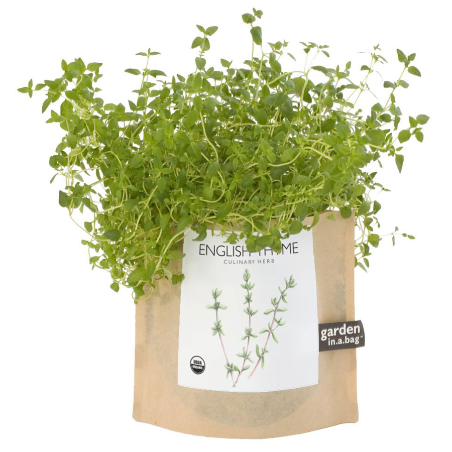 Image For Potting Shed Creations - Garden in a Bag - English Thyme