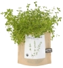 Cover Image for Potting Shed Creations - Garden in a Bag - English Thyme