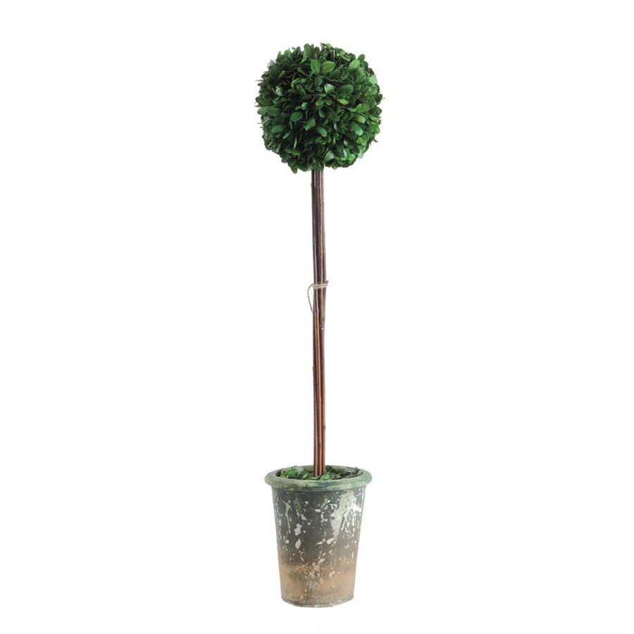 Image For Creative Co-Op - Topiary - Round Boxwood